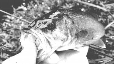 【釣るるん滞在記】7月のバスに、ツリラクが出会った。
